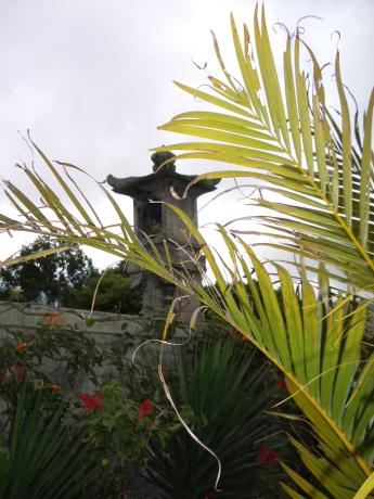 峇里島植物
