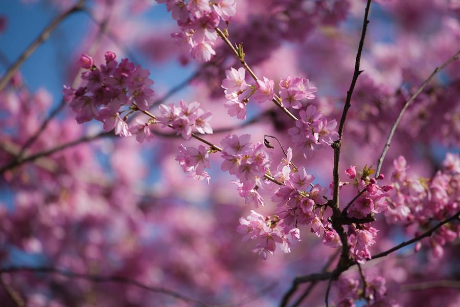 spring-001.jpg