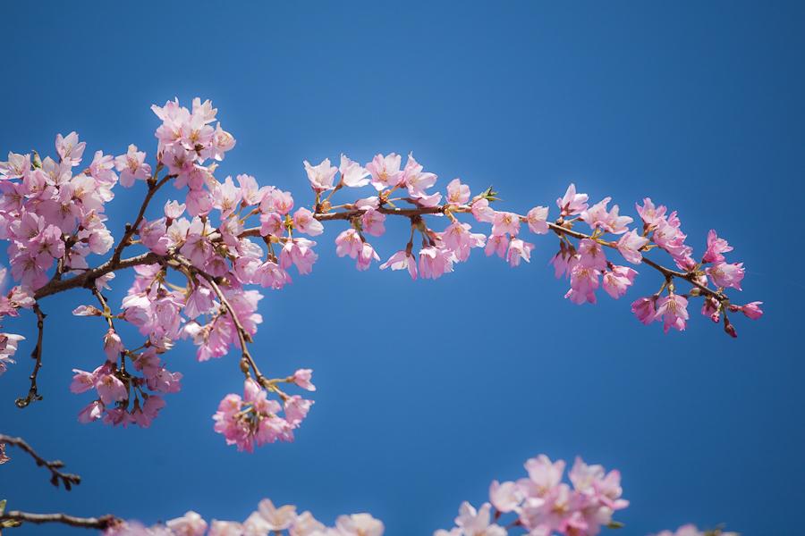 spring-002.jpg