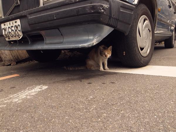 CAT4.jpg