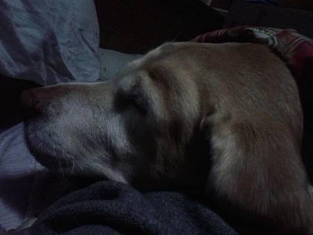20131228不舒服撒嬌睡著我身上.jpg