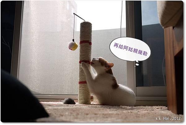 貓抓柱 (8)