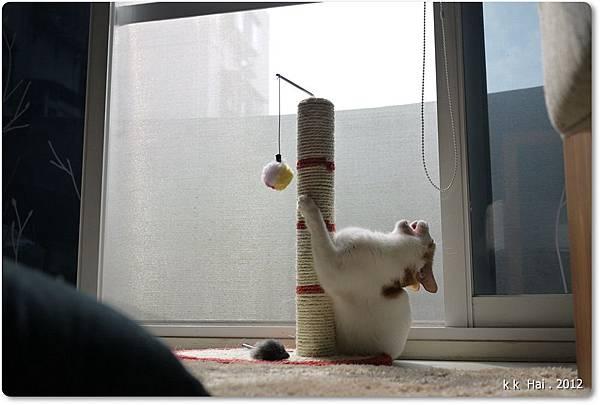 貓抓柱 (7)