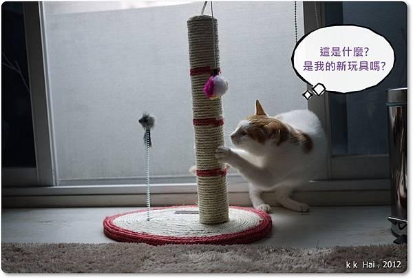 貓抓柱 (1)