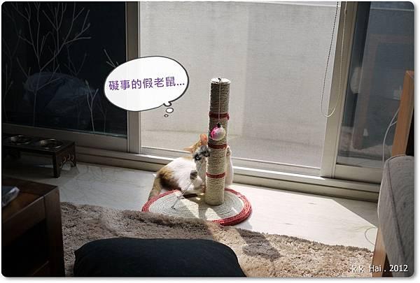 貓抓柱 (3)