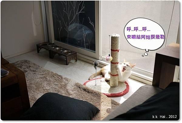 貓抓柱 (2)