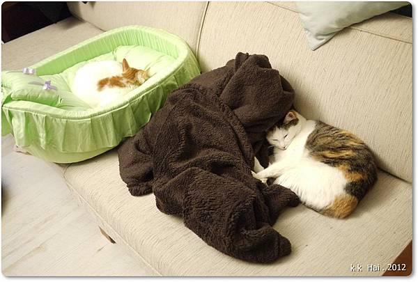 貓咪床 (3)