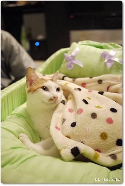 貓咪床 (5)