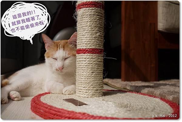 貓抓柱 (19)
