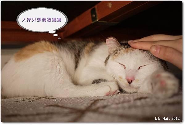 貓抓柱 (11)