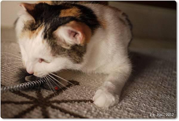 貓抓柱 (14)