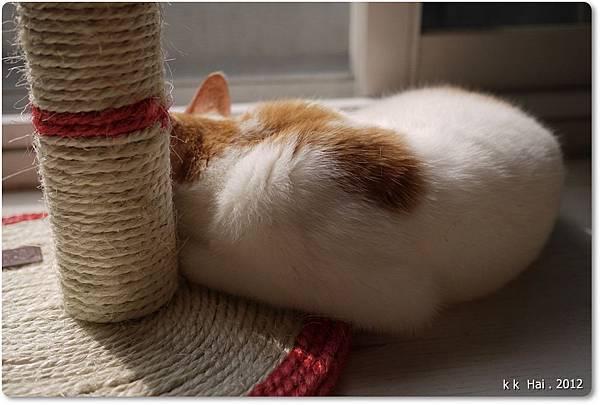 貓抓柱 (18)