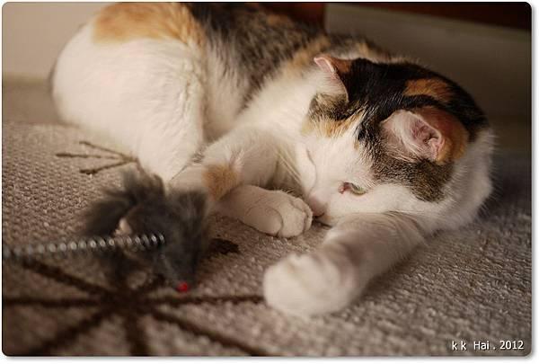 貓抓柱 (13)
