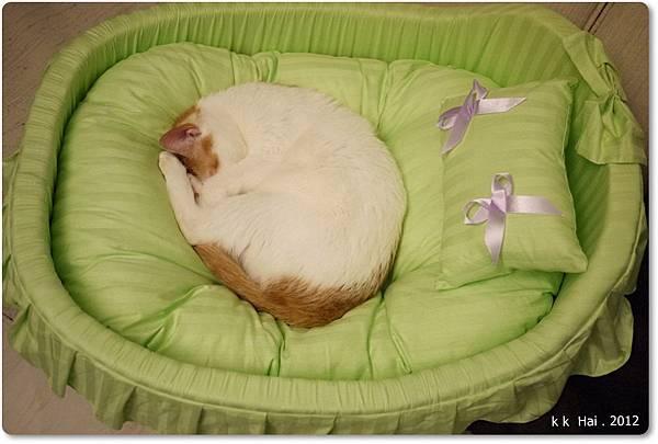 貓咪床 (4)