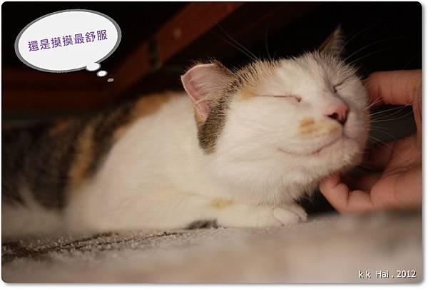 貓抓柱 (15)