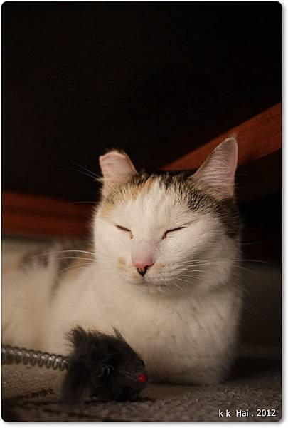 貓抓柱 (12)