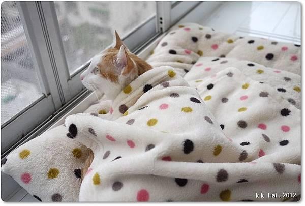 貓咪墊子 (7)