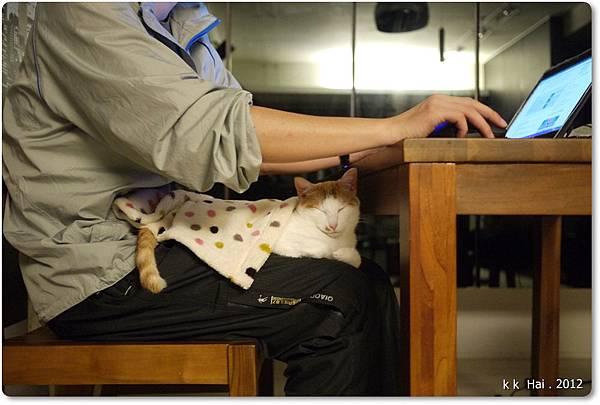貓咪墊子 (5)