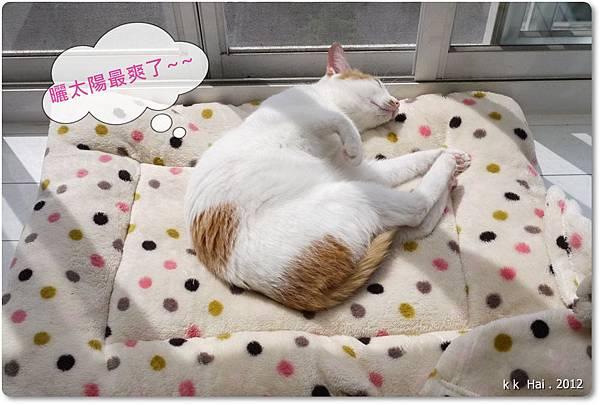 貓咪墊子 (2)