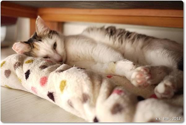 貓咪墊子 (3)
