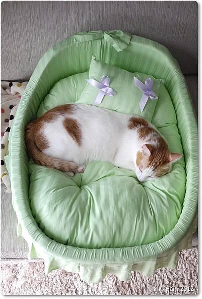貓咪床 (13)