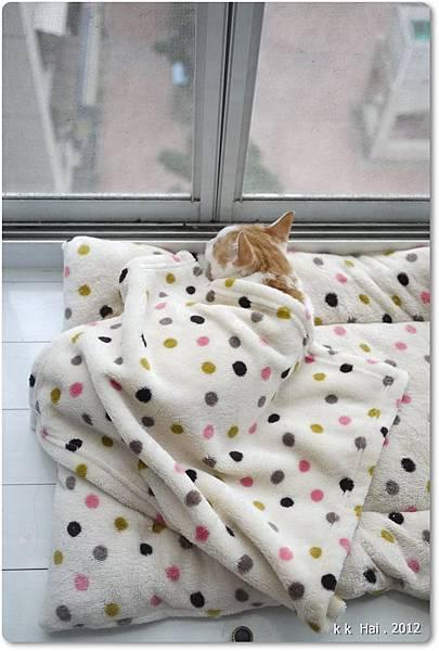貓咪墊子 (8)