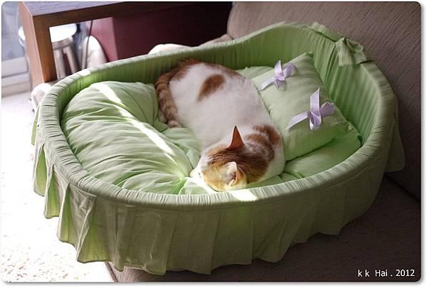 貓咪床 (11)