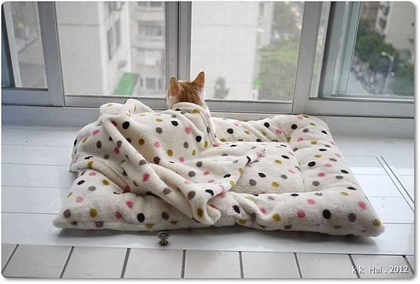 貓咪墊子 (6)