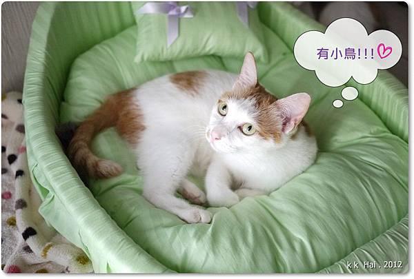 貓咪床 (18)