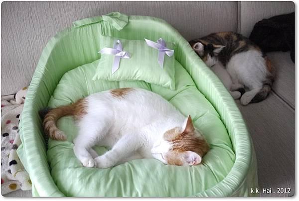 貓咪床 (17)