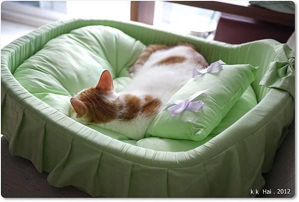貓咪床 (15)