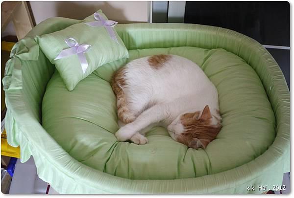 貓咪床 (24)