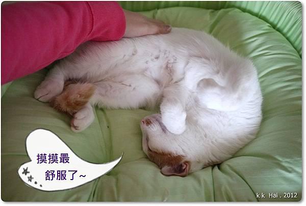 貓咪床 (26)