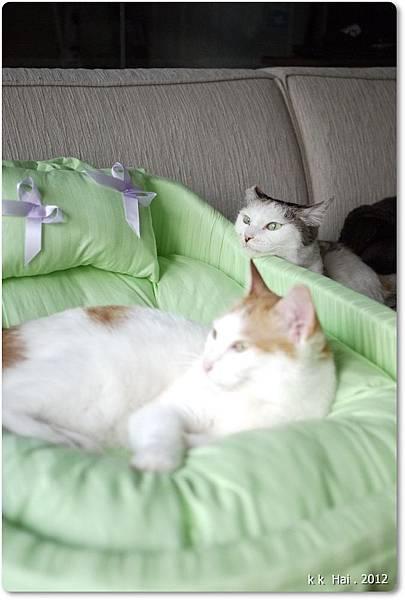 貓咪床 (20)