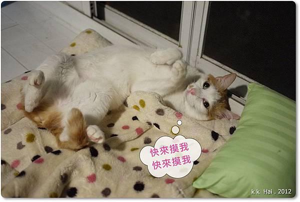貓咪墊子 (22)