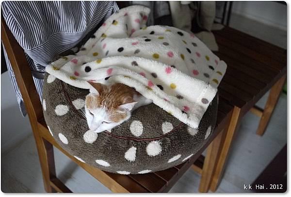 貓咪墊子 (15)