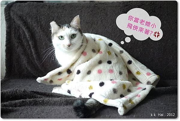 貓咪墊子 (10)