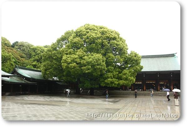東京 Day 2 (12).JPG