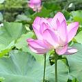 20050626_46.JPG