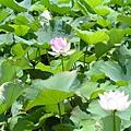 20050626_23.JPG