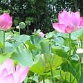 20050626_47.JPG