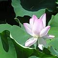 20050626_31.JPG