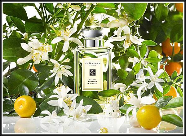 Jo Malone Orange Blossom Cologne Image