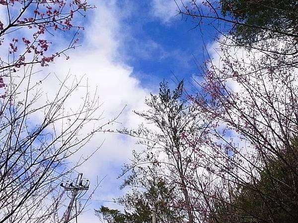 天空藍,櫻花紅
