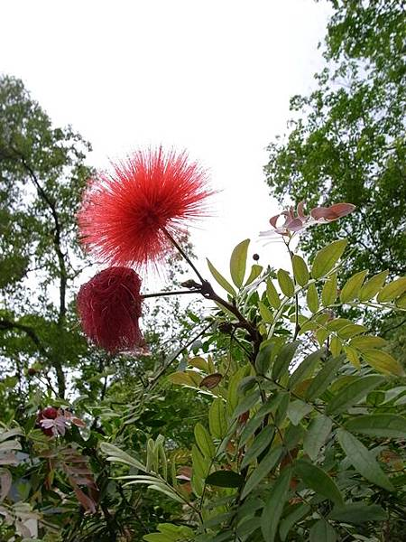 紅花你叫什麼名字啊?