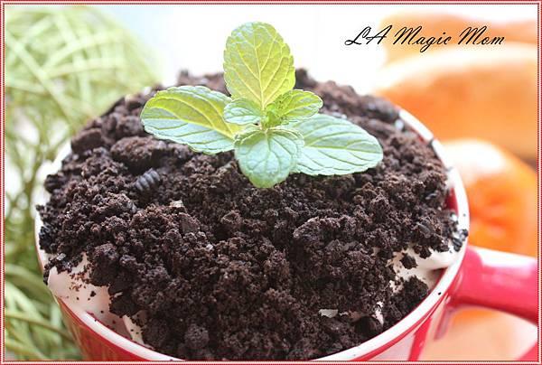 盆栽咖啡6-6