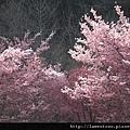 2011_wulin_II_0055.JPG