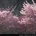 2011_wulin_II_0059.JPG