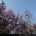 2011_wulin_II_0104.JPG