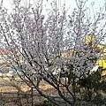 2011_wulin_II_0181.JPG